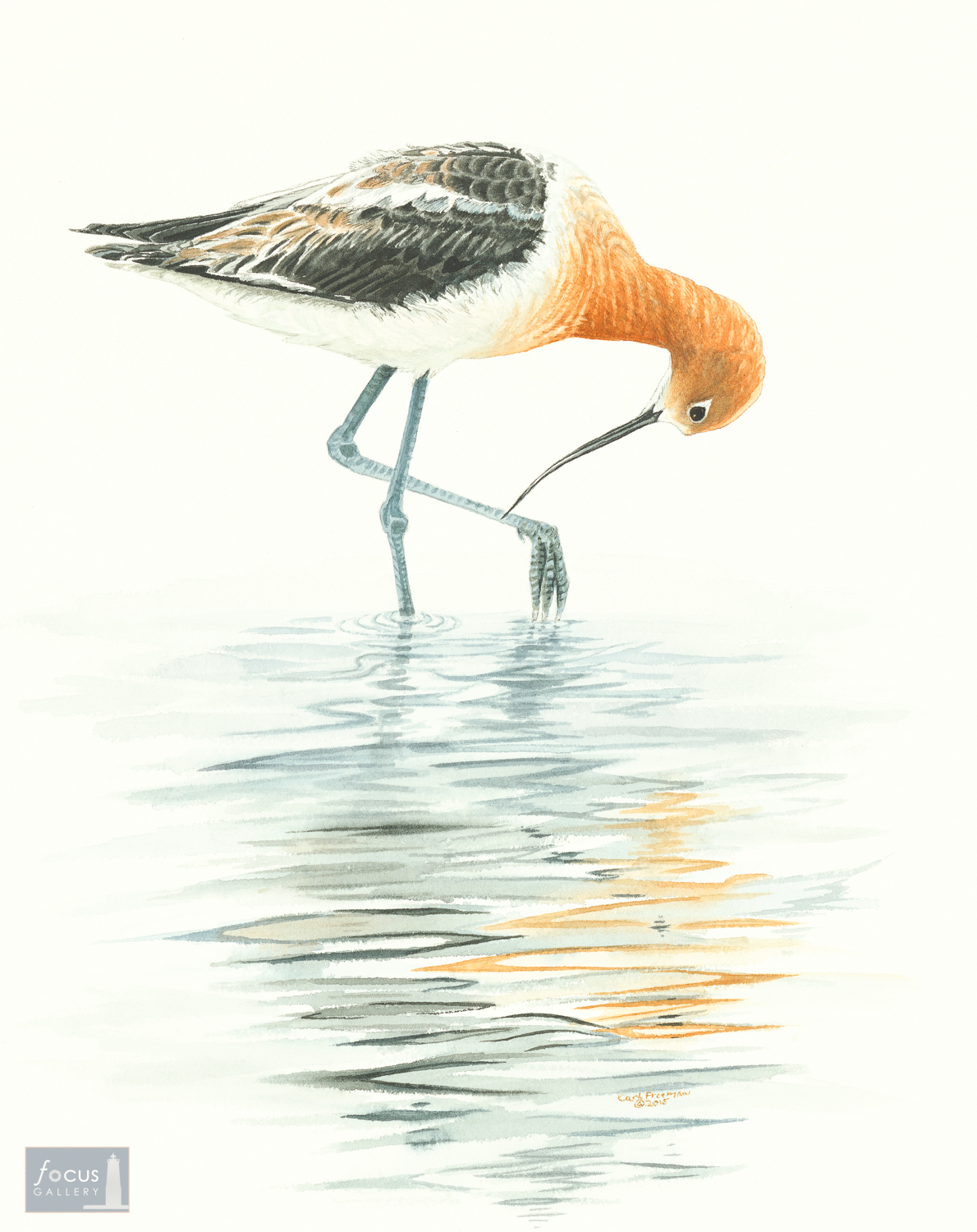 Original watercolor painting of an Avocet shorebird and its reflection.