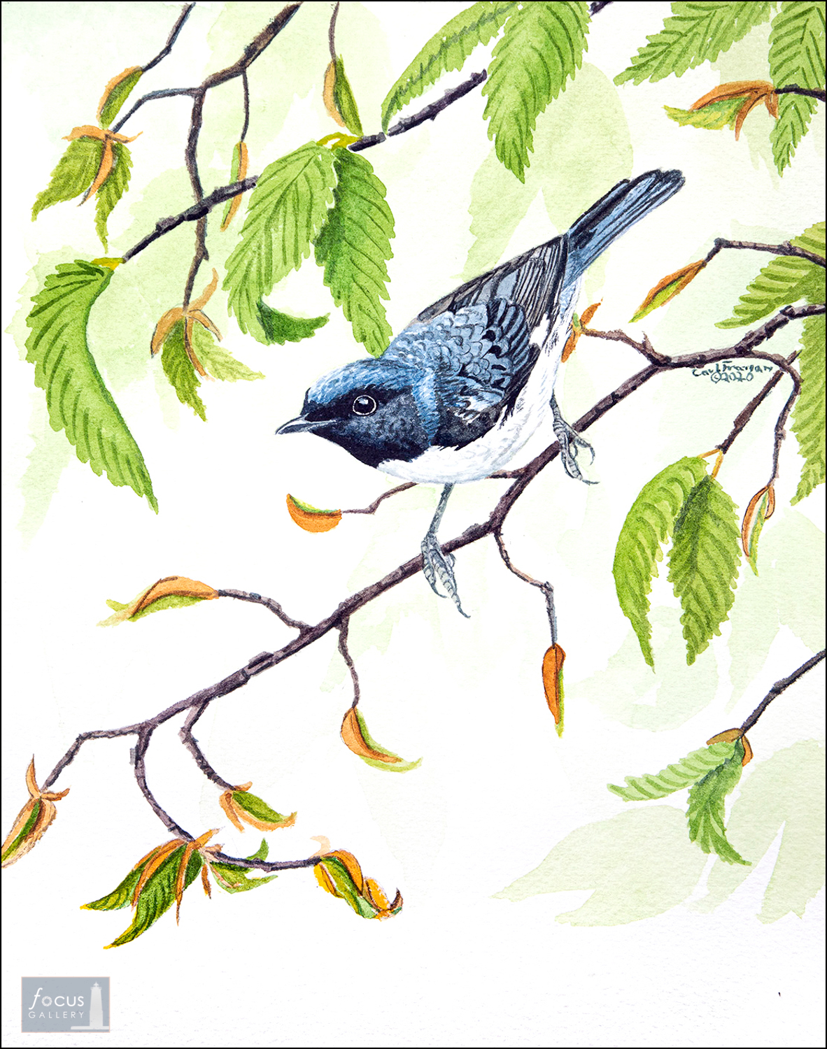 Original watercolor painting of a Black-throated Blue warbler songbird.