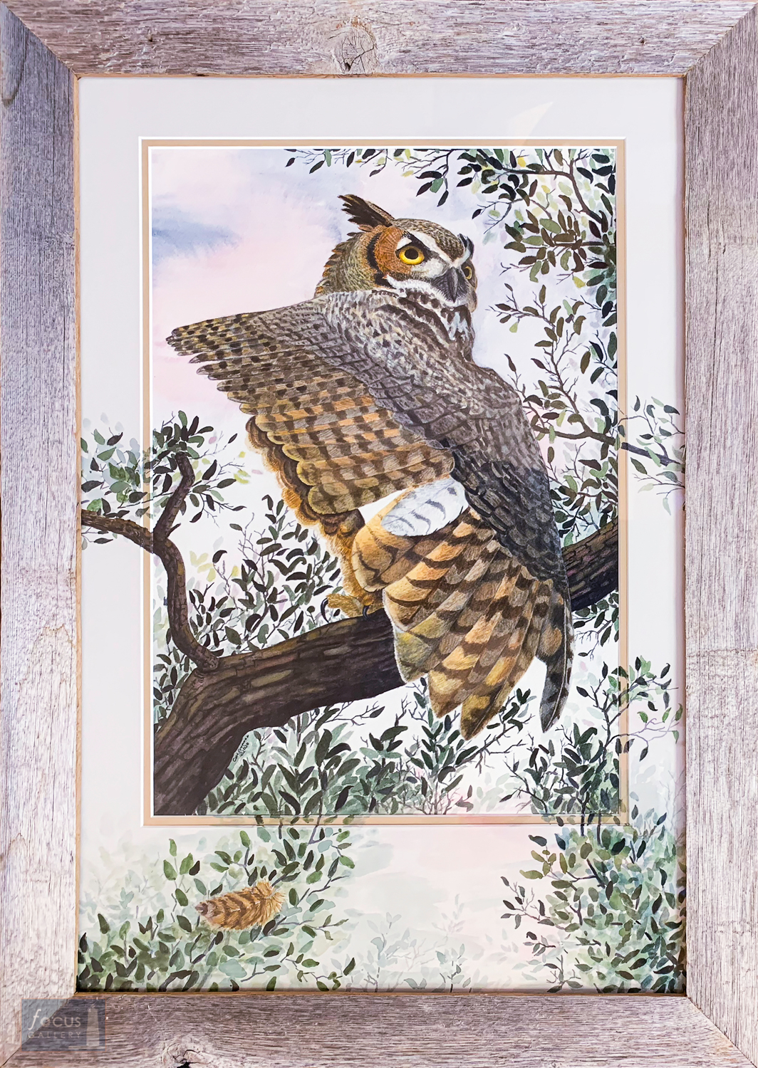 Original watercolor painting of a Great Horned Owl bird stretching its wing with painting continued onto mat board.