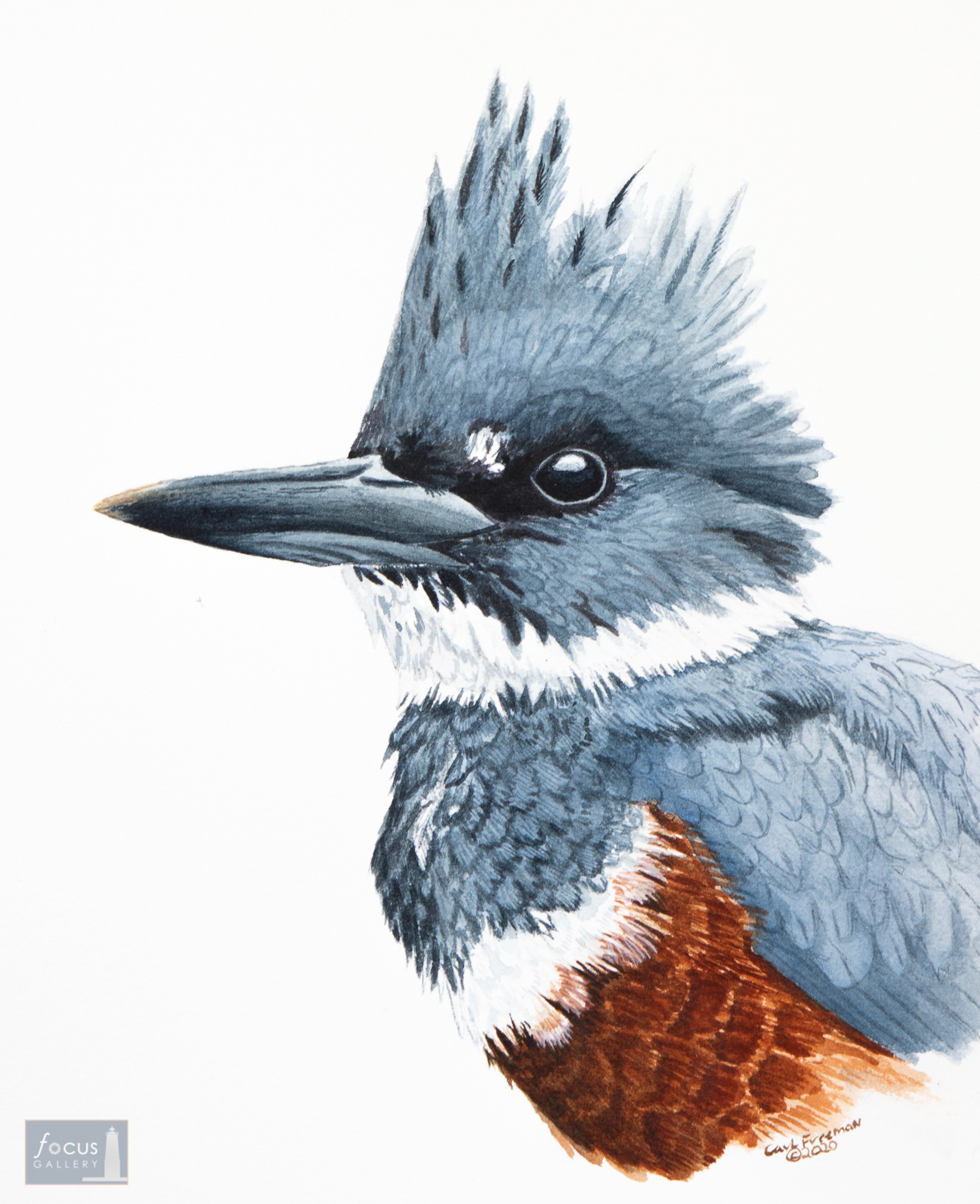 Original watercolor painting of the detail of a Belted Kingfisher's head.