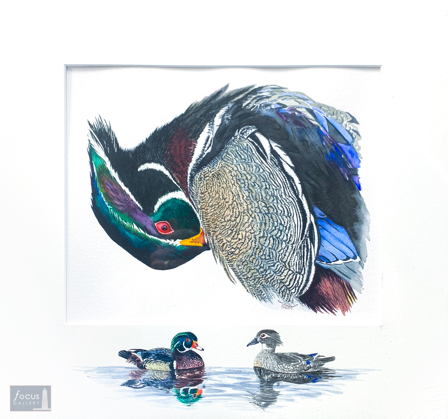 Original watercolor painting of a preening Wood Duck with an embellished mat featuring a pair of Wood Ducks swimming.
