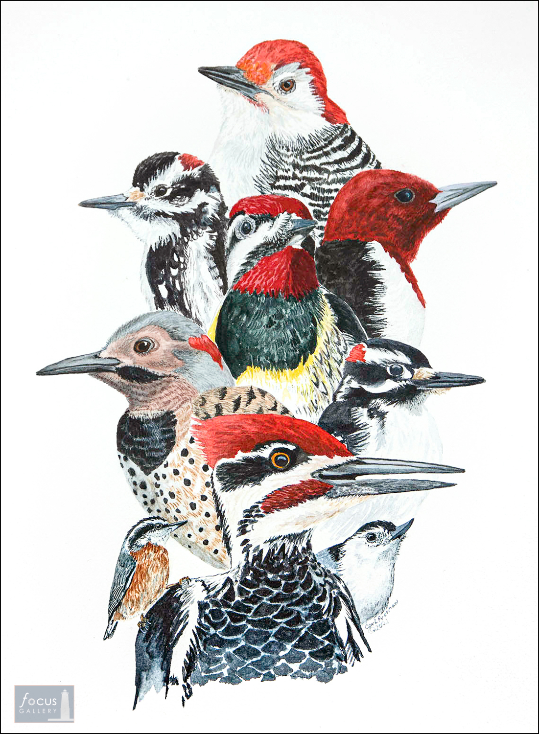 Watercolor collage of different kinds of woodpeckers.