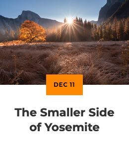 The Smaller Side of Yosemite