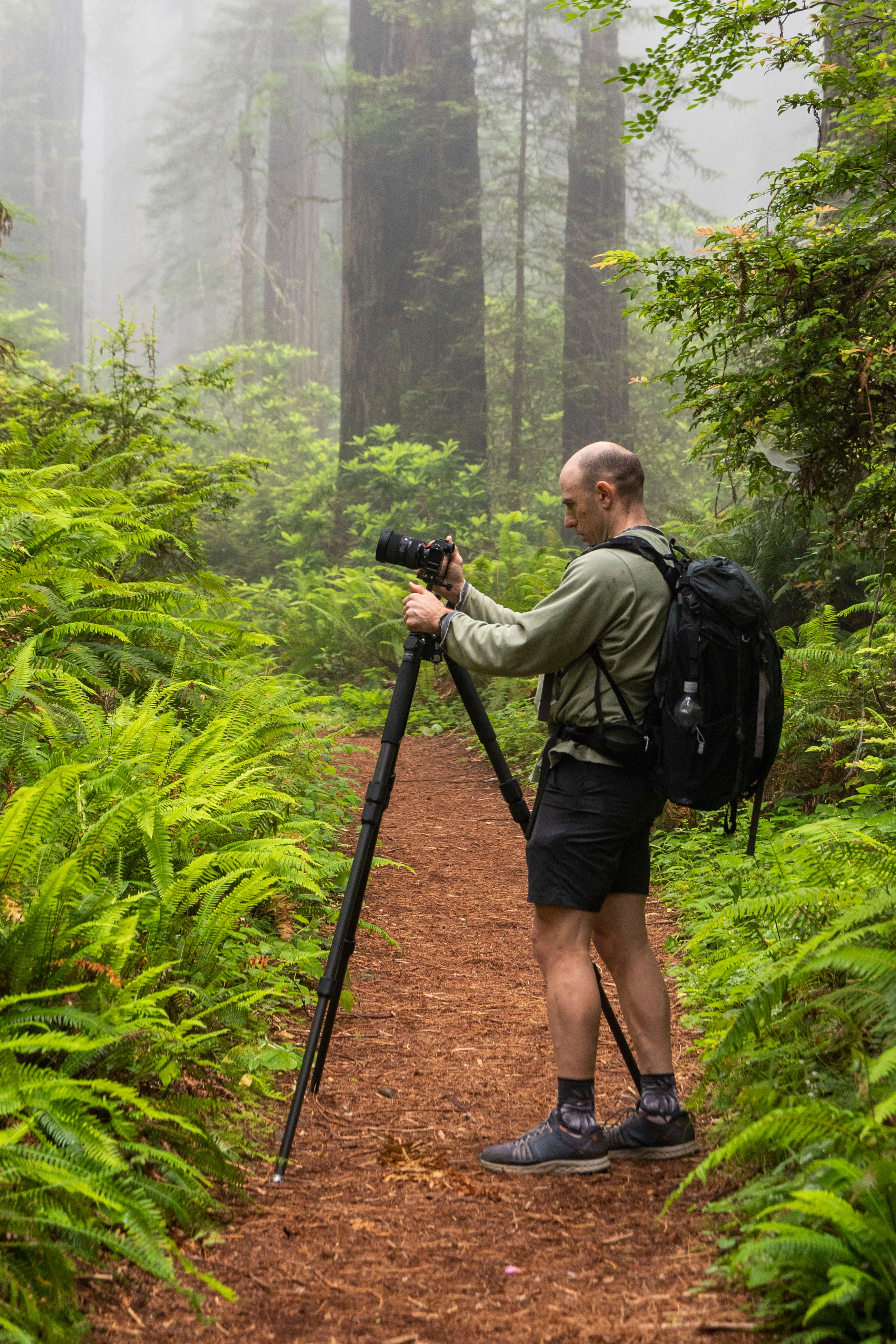 photography in the redwood state and national parks