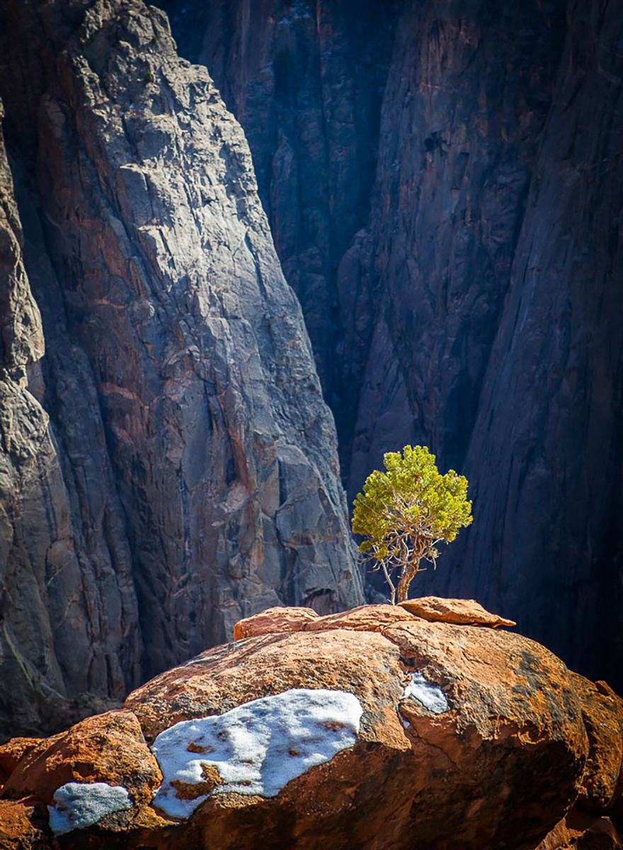 July 2017 - Lone Pine in the Black Canyon